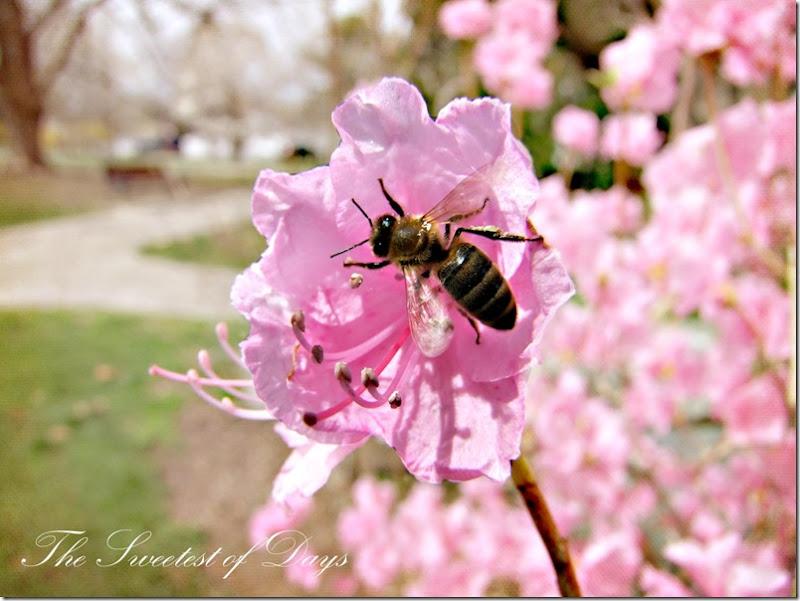 Beeing Spring