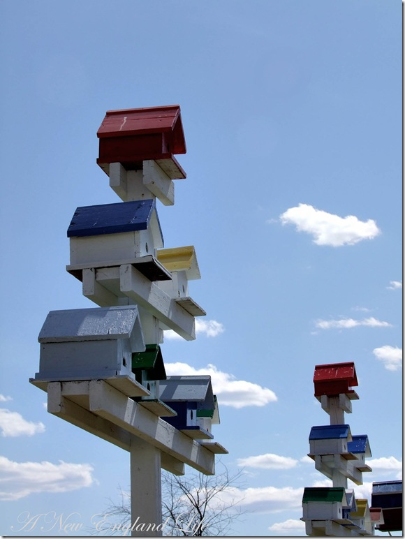 Birdhouses sky view