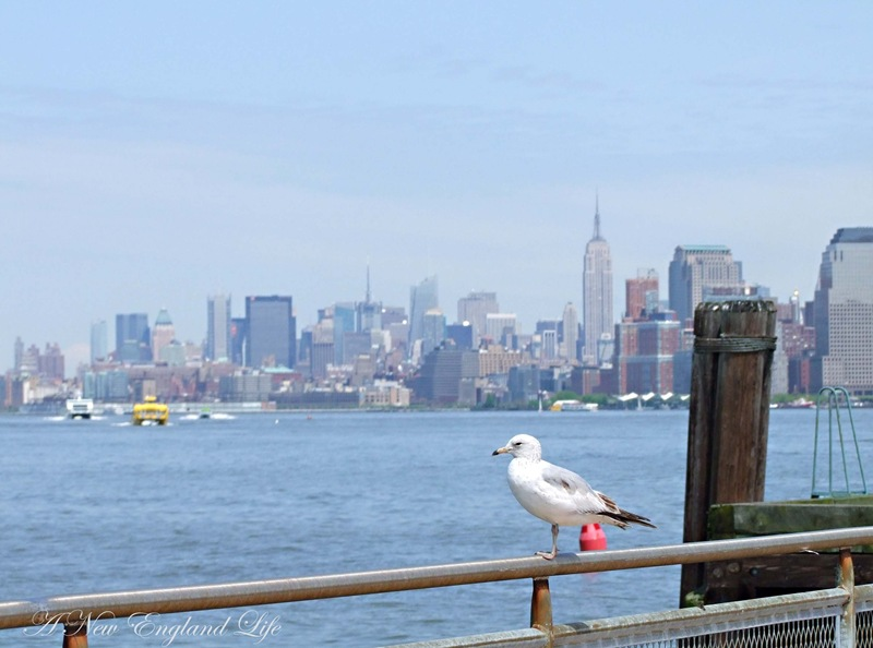gull at statue