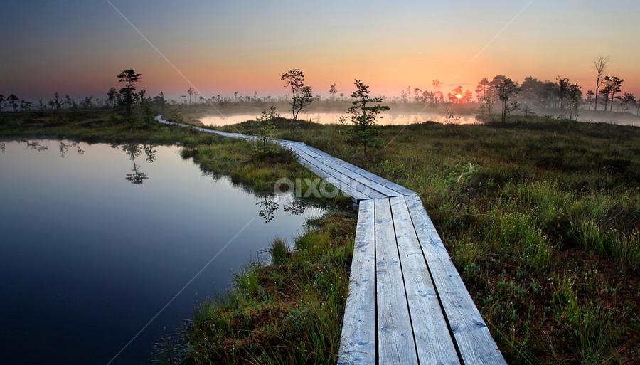 Blue Eyes by Rok Godec - Landscapes Travel ( sunrise, baltic, tree, water, sun, summer, horizon, path, estonia, waterscape, bogs, bog, europe, lake, landscape )