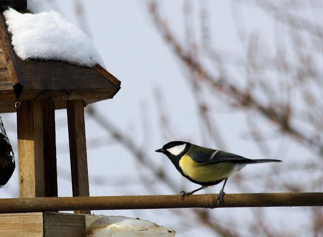 les oiseaux du jardin (fil ouvert) _MG_1538mod