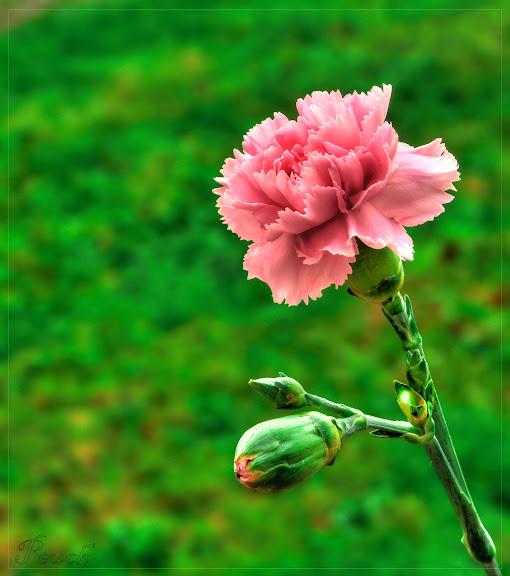 Fleurs du jardin P1020461a_2_311.hdr