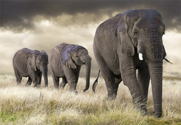 Wildlife-photography-elephant