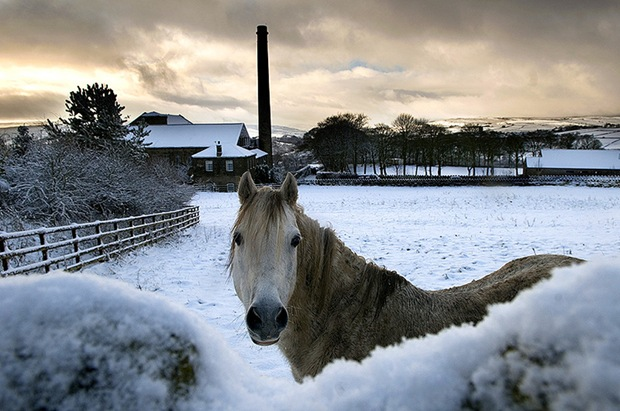 horse-in-snow