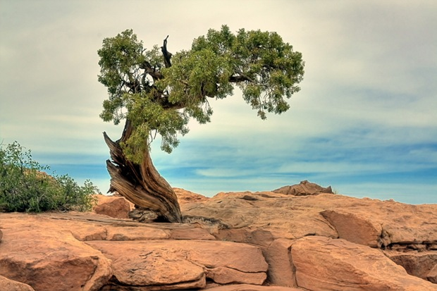 Tree-on-rock