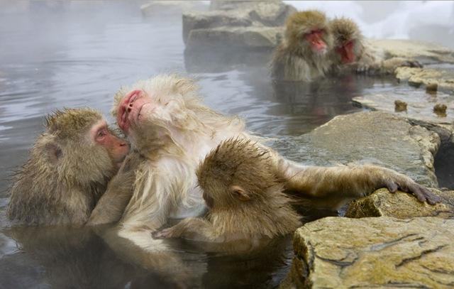 [Show-monkey-in-spring[3].jpg]
