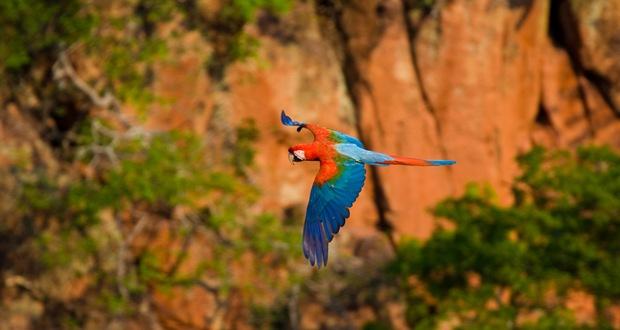 Creative-birds-photography-Aarara-vermelha