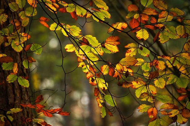 Fall-leaves-and-foliage
