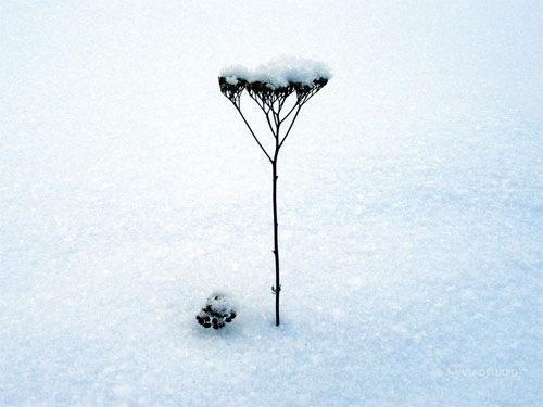 Lonely Winter Tree Wallpaper