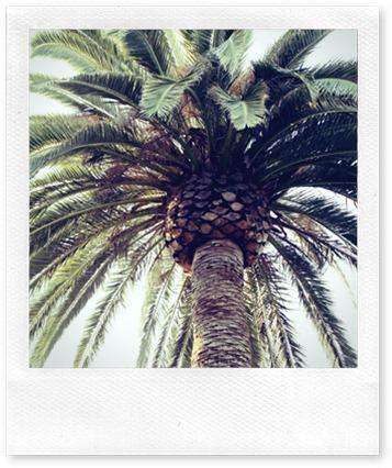 palmtree2