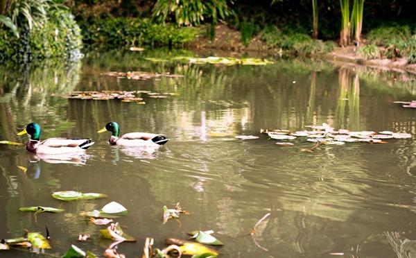 ducks2 (1 of 1)