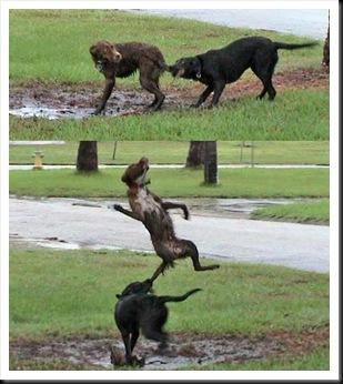 violent-dog