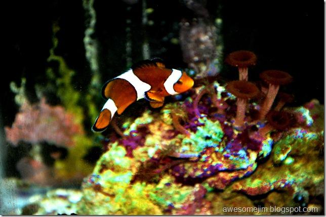 fishthree3