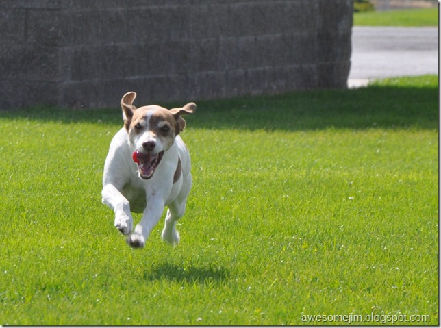 flyingrocketdog