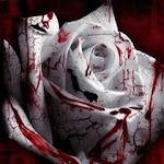 Blood_Rose.jpg