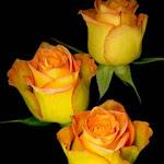 Nice_Flower_6115.jpg
