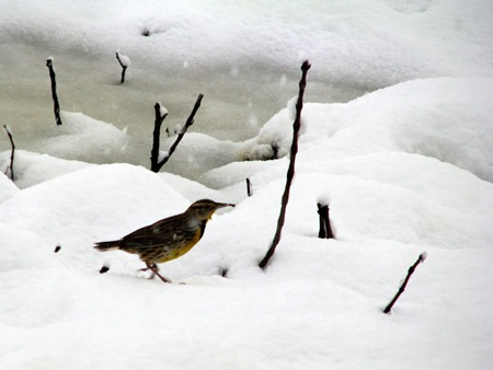 snowbirdground