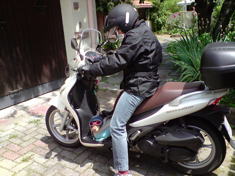 chien motard P230610_14.06