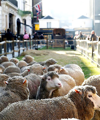 Savile Row Sheep.jpeg