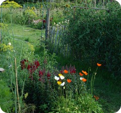 allotment4