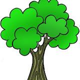 árbol 6.JPG