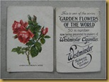 Westminster cards - american beauty