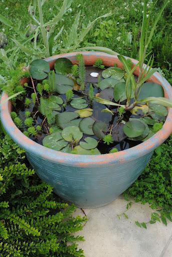 Pour un petit bassin de jardin page 2 au jardin forum for Petit bassin pour jardin