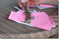 lizard rescue 013