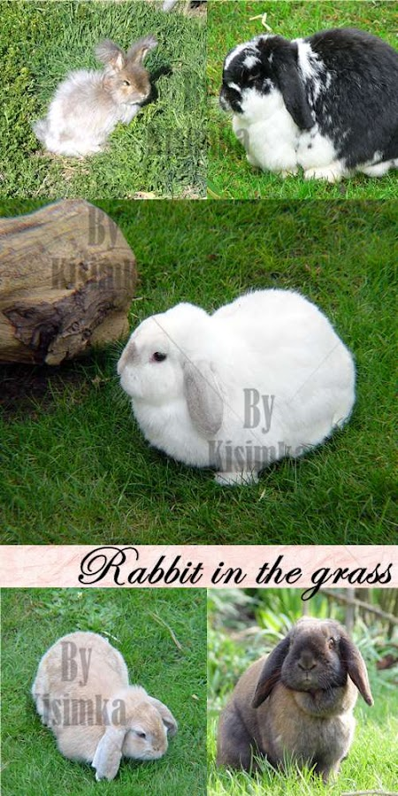 Stock Photo: Rabbit in the grass