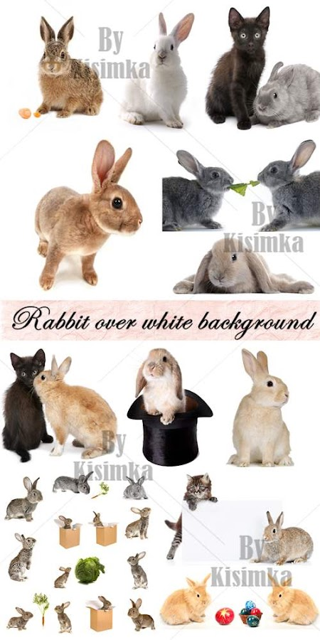 Stock Photo: Rabbit over white background. Big collection