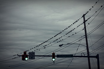 birdsontheline