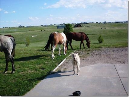 200907_horses_b