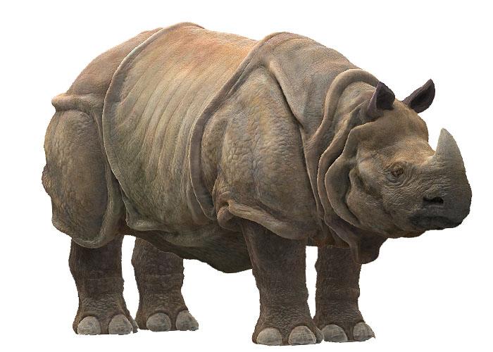 http://lh5.ggpht.com/_8jbLh9YEAEI/SZ1Zl0UY1HI/AAAAAAAAIwQ/pHSQfTzwT2g/s800/rinoceronte%20java.jpg
