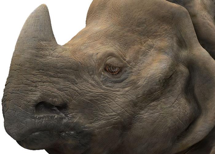http://lh5.ggpht.com/_8jbLh9YEAEI/SZ1ntsf5oYI/AAAAAAAAIwg/WwMdIgs-5sY/s800/rinoceronte%20de%20java.jpg