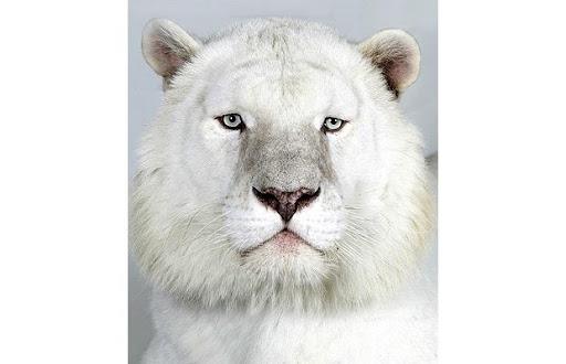 http://lh5.ggpht.com/_8jbLh9YEAEI/SeXqU2eoXvI/AAAAAAAAJGA/7okGuq9lEpM/Snow-White-male-8_1383939i.jpg