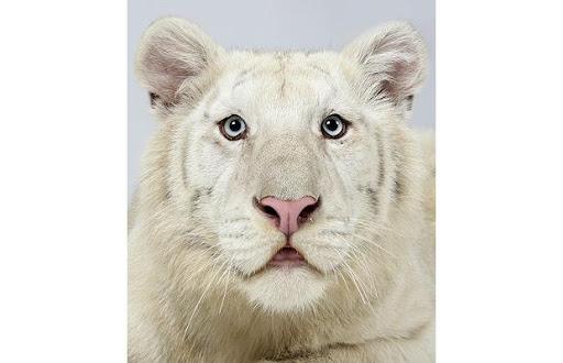 http://lh5.ggpht.com/_8jbLh9YEAEI/SeXqUsaNkqI/AAAAAAAAJFw/Cvx3fmDkRZg/Snow-white-male-1_1383941i.jpg