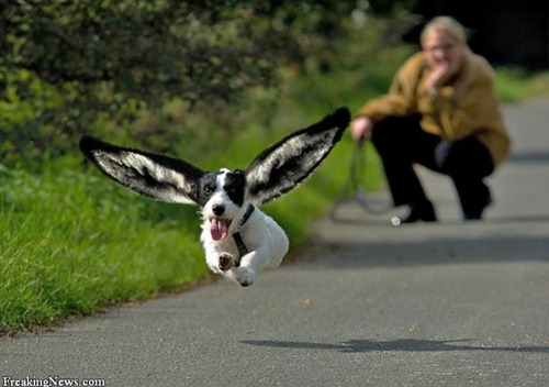 funny-dog-photo