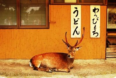 Nara 033