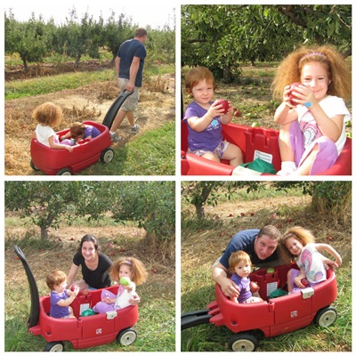 More Apple Picking 2010