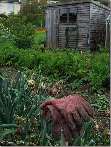 garden shed gloves flickr
