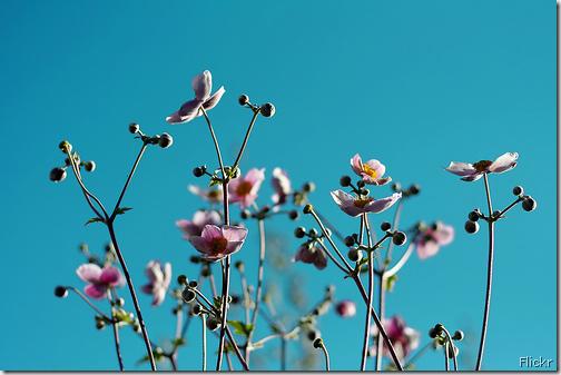 sky flickr