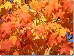 Orange_Leaves