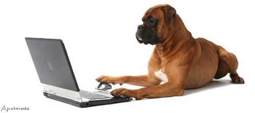 pawsse boxer computer apetments