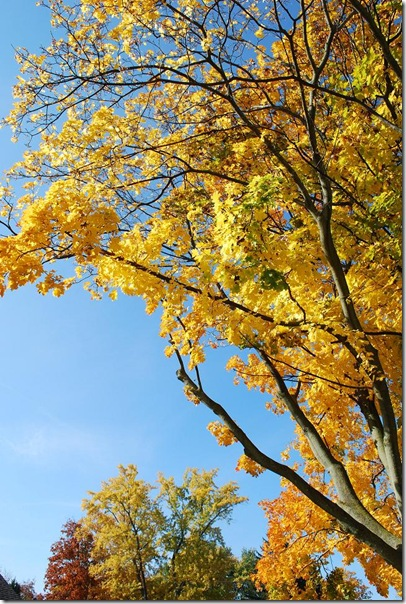 RS yellow tree sky