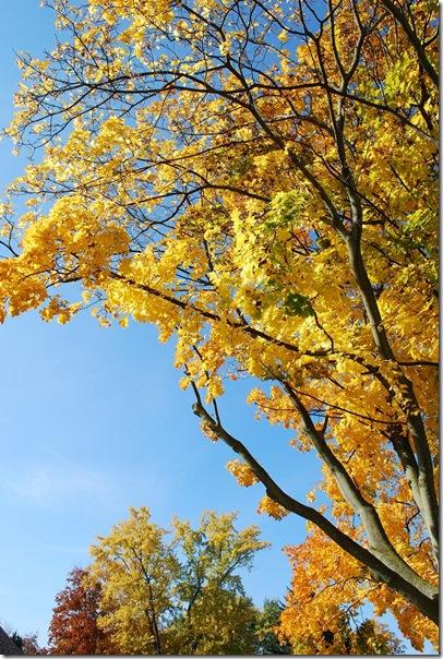 RS yellow tree sky