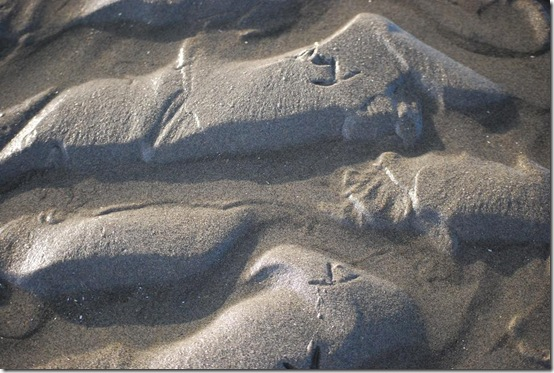 sand bird footprints