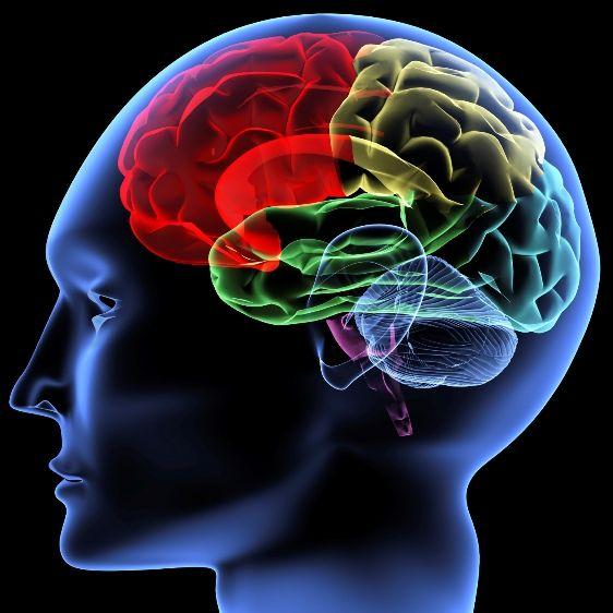 ¿Qué no Funciona en mi Organismo? Mira en tu Cerebro