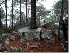 Pin sur rocher