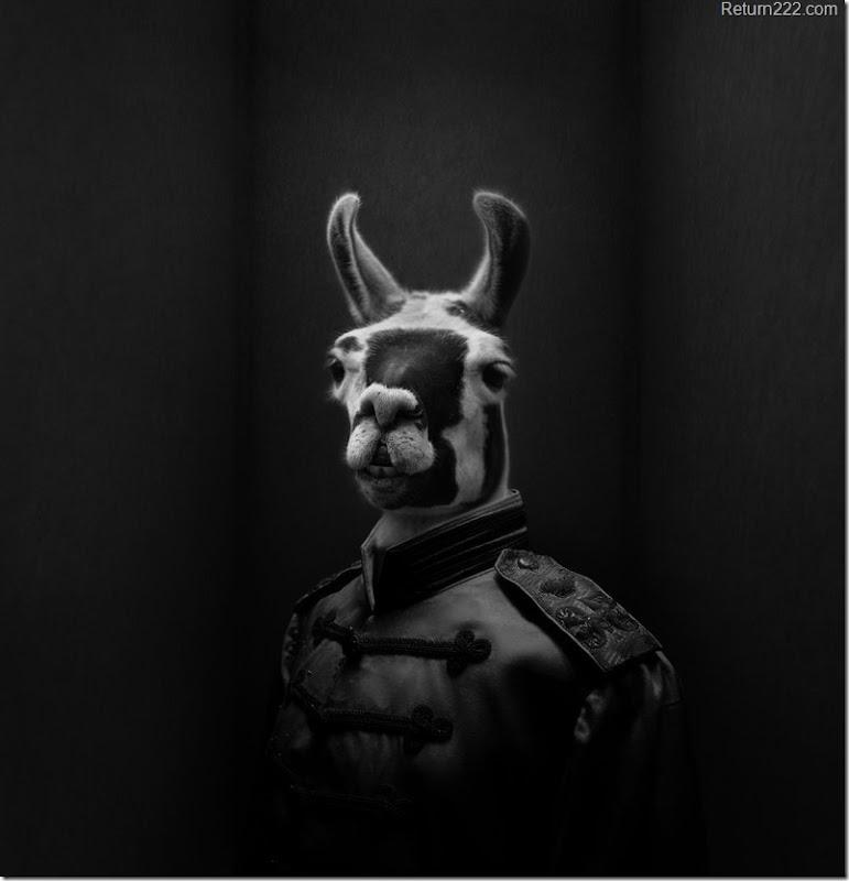 commander_lewis_llama_brigade_by_csnyder-d2xve9x