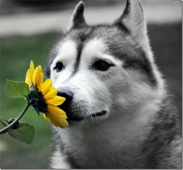 animales_bonitos (138)